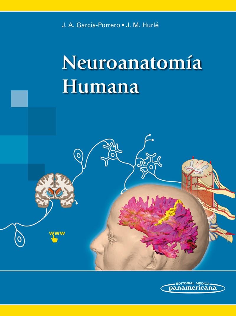 Neuroanatomía Humana